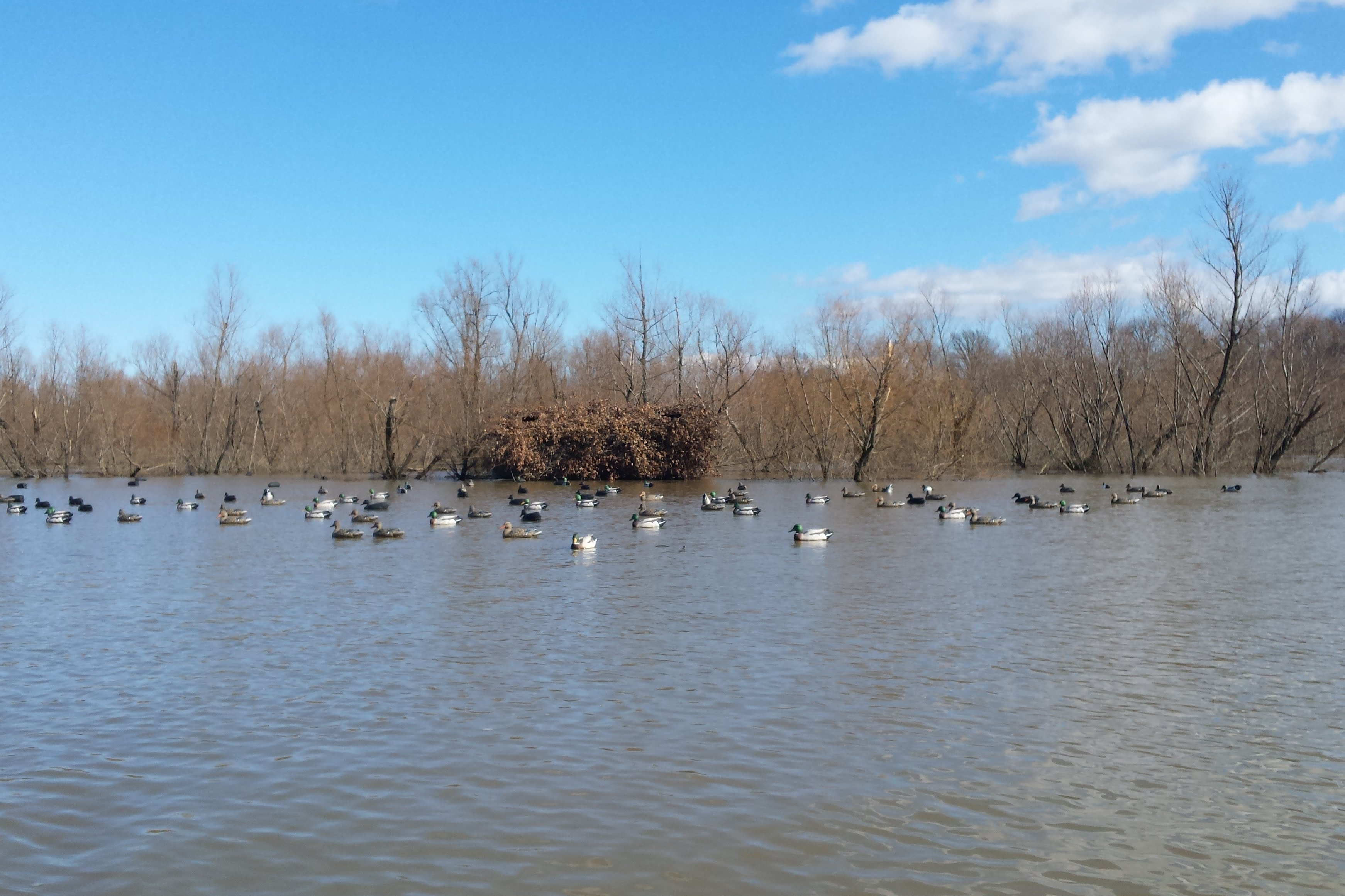 43+/- acres duck hunting fulton county, kentucky - southern land company